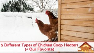 5 Different Types of Chicken Coop Heaters & Our Favorite