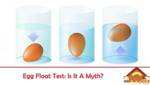 Egg Float Test: Is it a Myth?