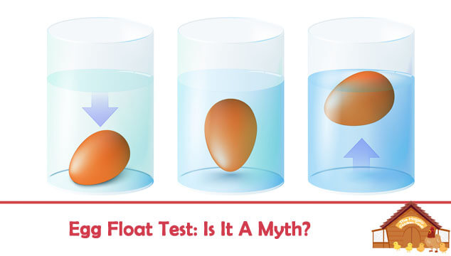Egg Float Test Blog Cover