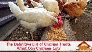 The Definitive List of Chicken Treats: What Can Chickens Eat?