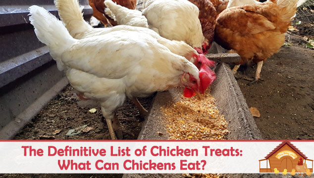 The Definitive List of Chicken Treats What Can Chickens Eat Blog Cover