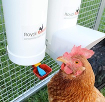 Royal Rooster Twin Waterer