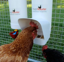 Tube Chicken Feeder