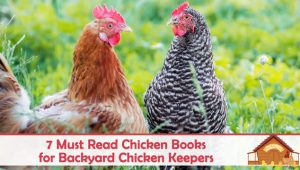7 Must Read Chicken Books for Backyard Chicken Keepers