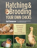 Brooding Your Own Chicks