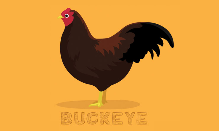 Buckeye Chicken