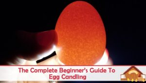 The Complete Beginner's Guide To Egg Candling