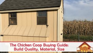 First Time Buyers Guide To Chicken Coop Kits