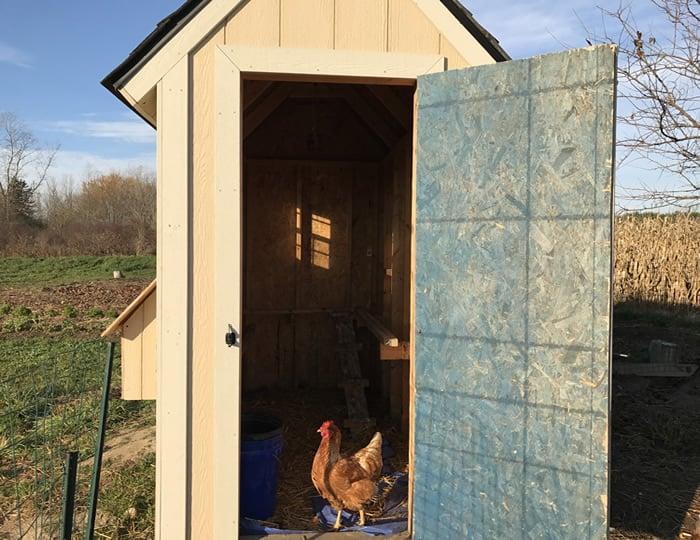 chicken coop door height