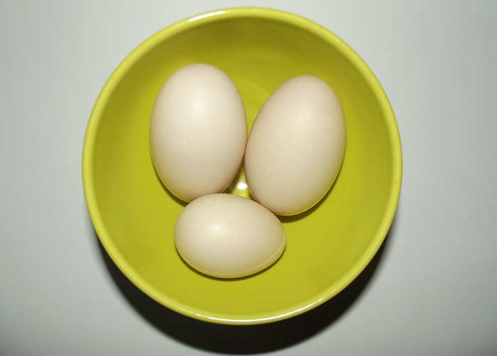 duck egg vs chicken egg