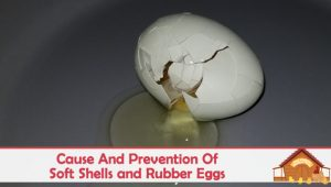 Cause And Prevention Of Soft Shells and Rubber Eggs
