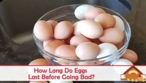How Long Do Eggs Last Before Going Bad?