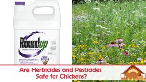 Are Herbicides and Pesticides Safe for Chickens?