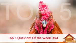Top 5 Questions Of The Week – #24