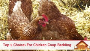 Top 5 Choices For Chicken Coop Bedding