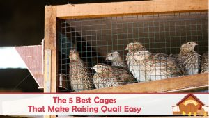 The 5 Best Quail Cages That Make Raising Quail Easy