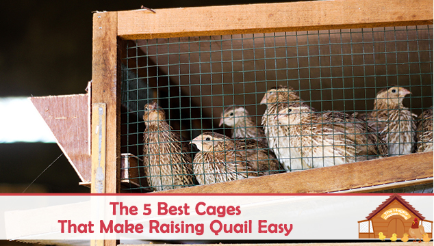 The 5 Best Cages That Make Raising Quail Easy