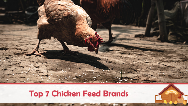 Top 7 Chicken Feed Brands