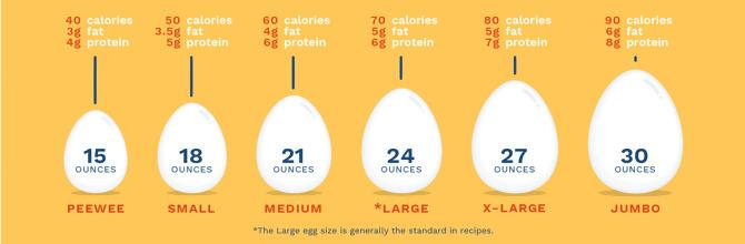 what chicken lays the largest eggs