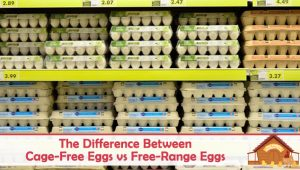 The Difference Between Cage-Free Eggs vs Free-Range Eggs