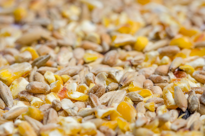 chicken feed mix