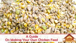 The Ultimate Guide to Making Your Own Chicken Feed