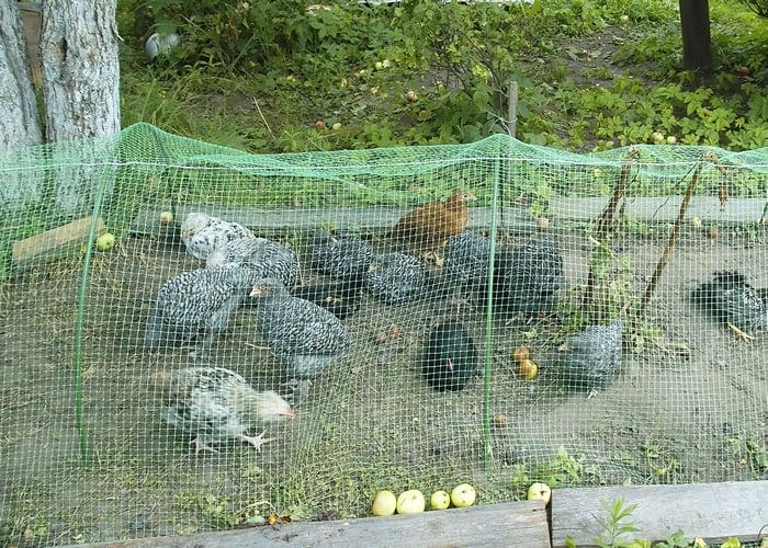 aviary chicken netting