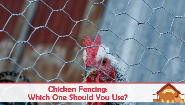 chicken fencing
