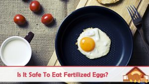 Is It Safe To Eat Fertilized Eggs?