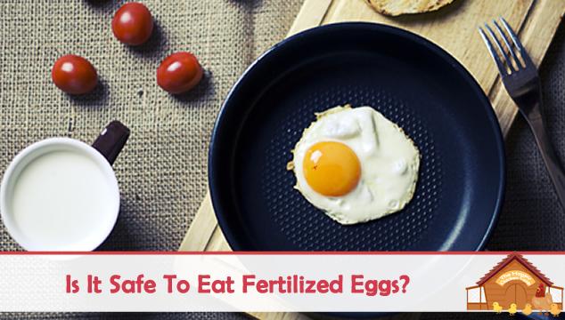 Is It Safe To Eat Fertilized Eggs?