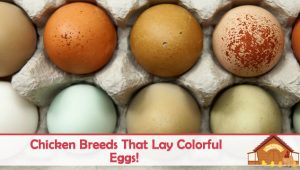 Colored Eggs: Why, How, and Who?