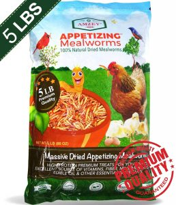 5lb mealworms