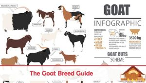 The Goat Breed Guide