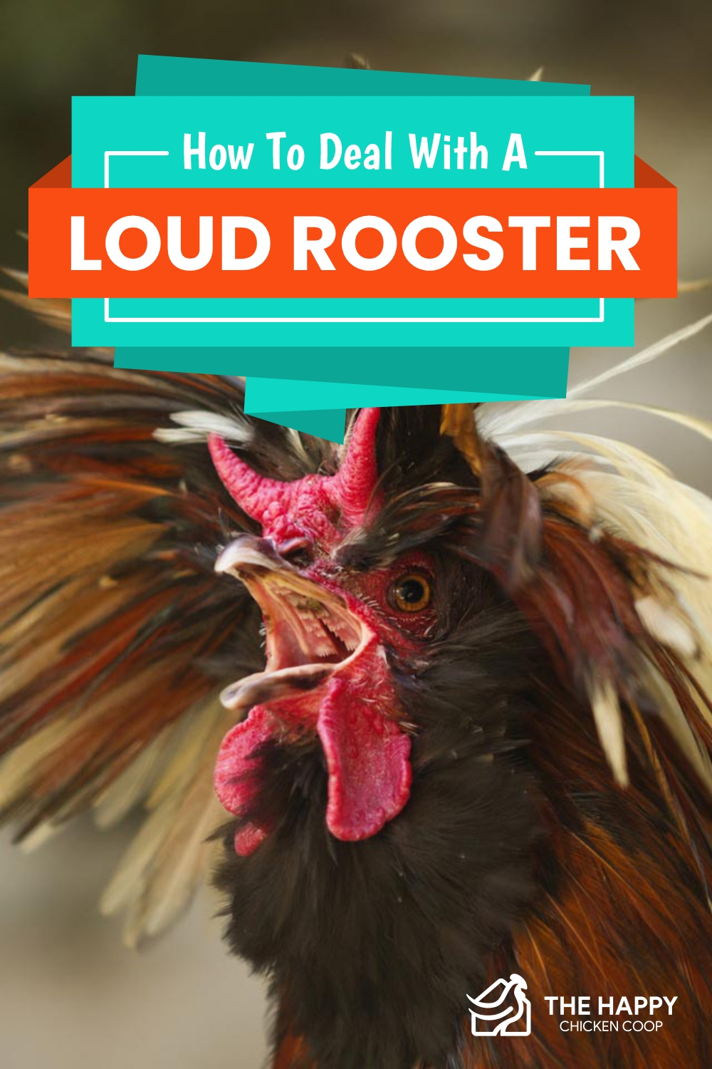 How To Deal With A Loud Rooster