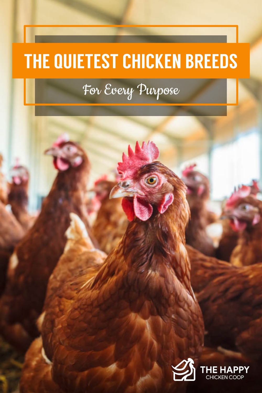 The Quietest Chicken Breeds For Every Purpose