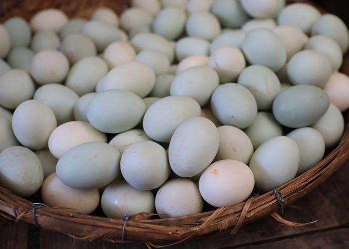 ancona duck eggs