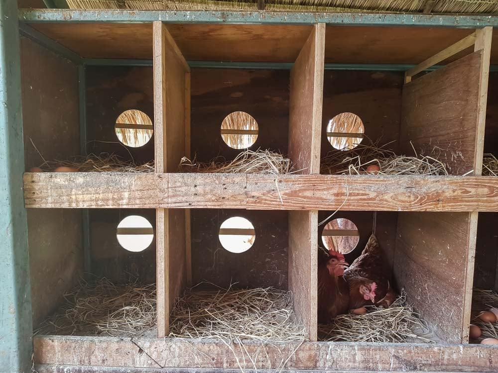 ventilation in chicken coop