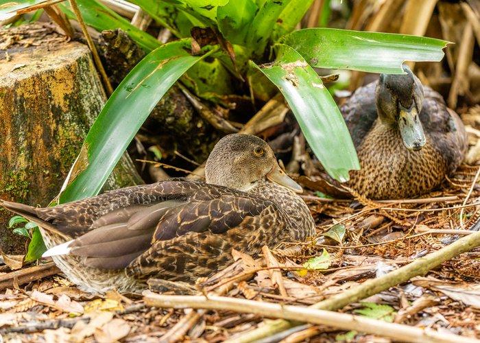 ducks sitting near nest