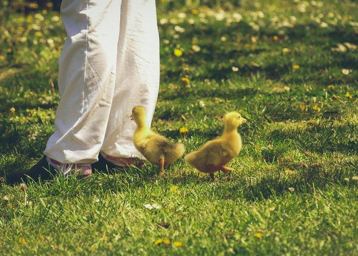 duck following their keeper