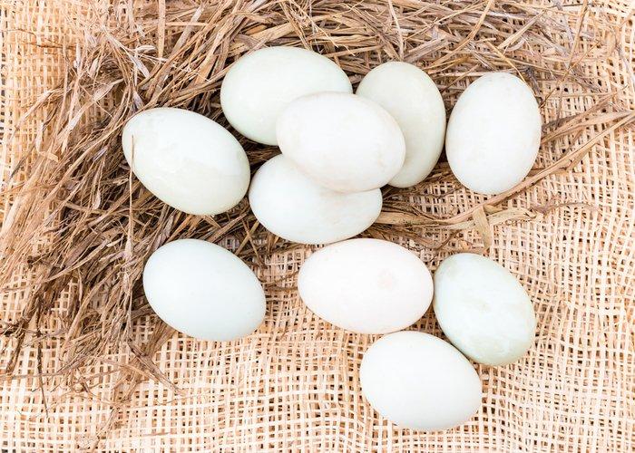 pekin duck eggs