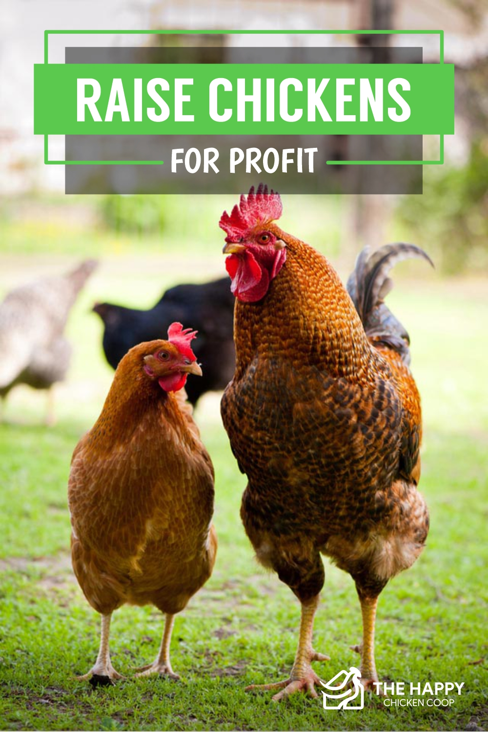 Raise Chickens for Profit