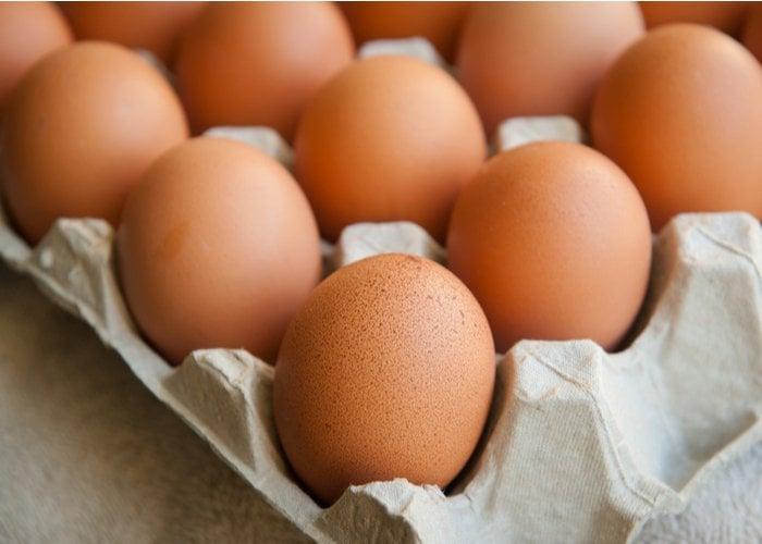 raise chickens for profit eggs