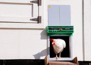happydoor Automatic coop door