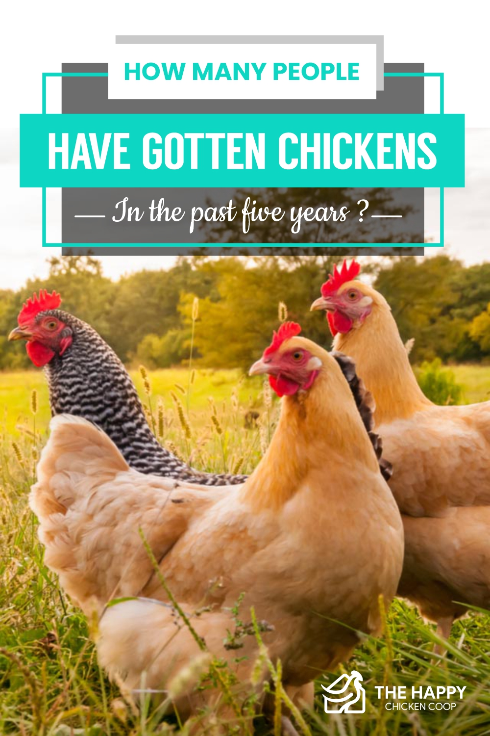 Chickens in the past 5 years
