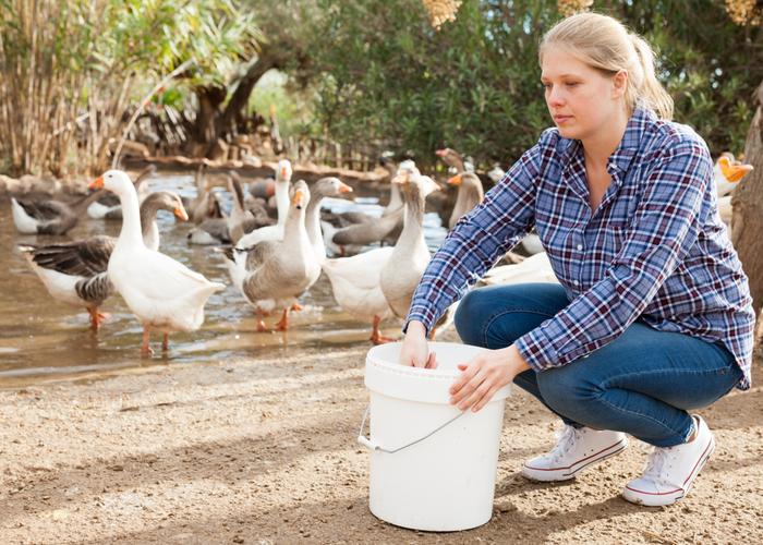 best duck waterer
