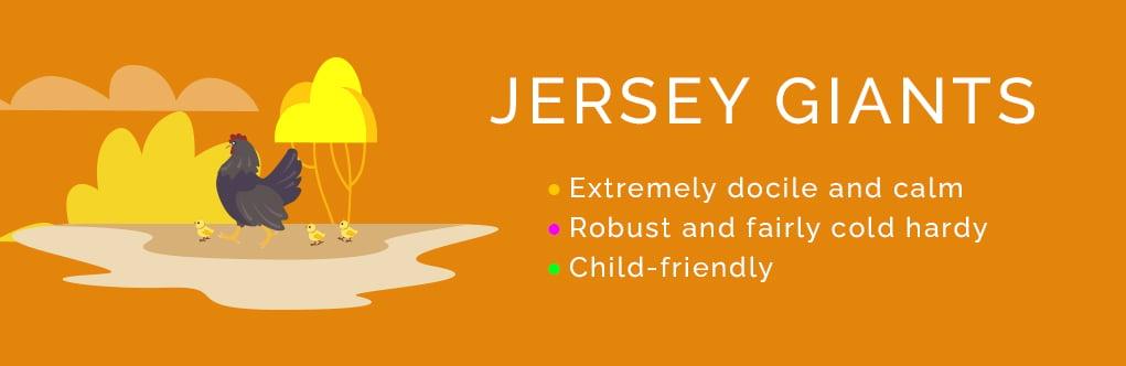 The Top 10 Friendliest Chicken Breeds Jersey Giants