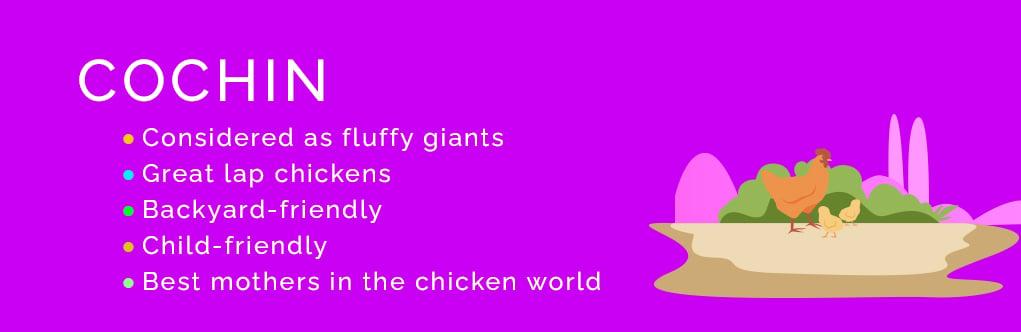 The Top 10 Friendliest Chicken Breeds Cochin