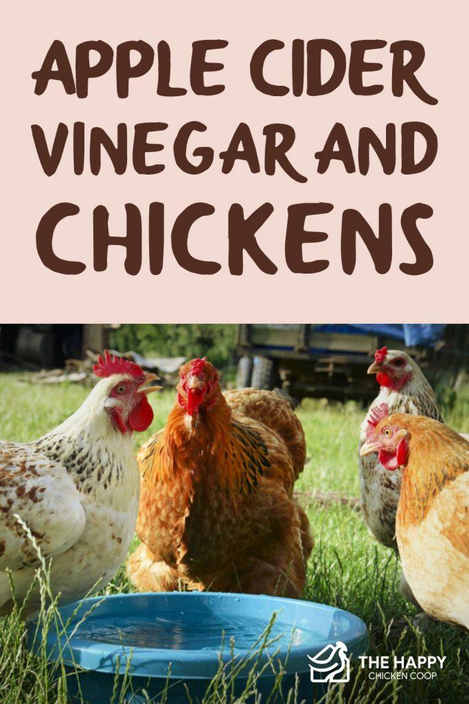 Apple Cider Vinegar and Chickens