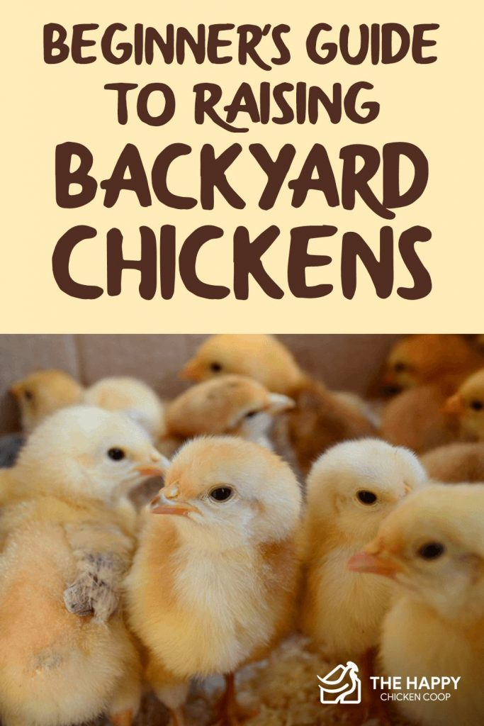 Guide to Raising Backyard Chickens