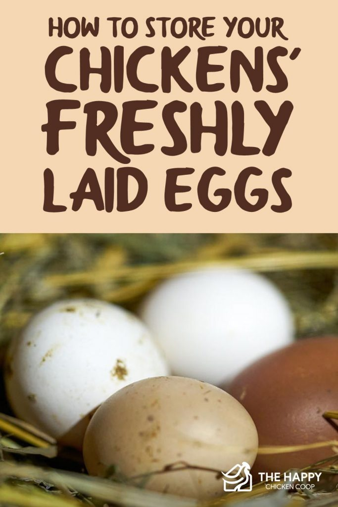 Store-Chickens-Freshly-Laid-Eggs